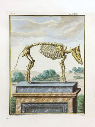 Three hand-colored copper engravings from Volume V of Buffon's Histoire Naturelle Générale et Particuliere