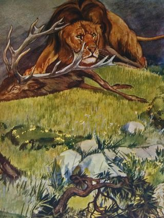 La Fontaine's Fables: A Selection. Jean de La Fontaine, Carton Moore Park, illustrator, René Bull, Edward Shirley.